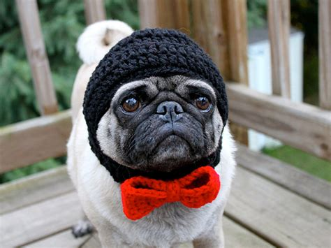 pugs with hats sad pug is the model for these silly hats 16 pics pleated