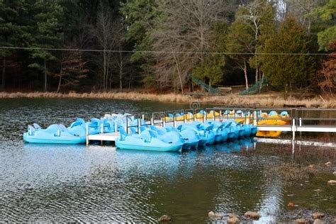 paddle boats bay area paddle boats in the recreational area at a lake stock
