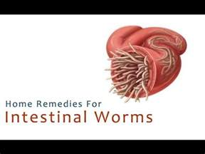 home remedies for worms in dogs home remedies for intestinal worms methods