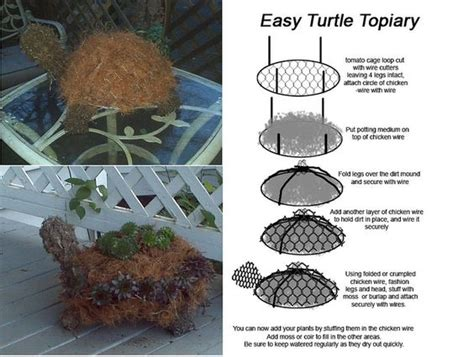 how to make a succulent turtle super easy turtle topiary diyusing tomato cage circle and