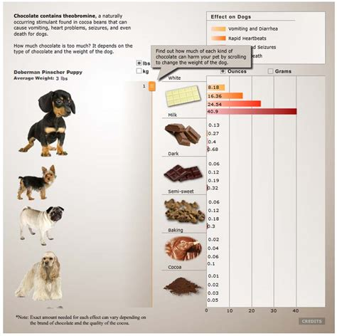 signs of chocolate poisoning in dogs chocolate poisioning in dogs theobromine toxicity levels