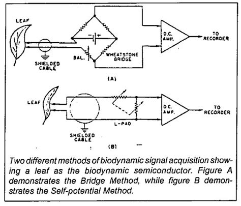biological electrical resistor quot detecting biodynamic signals remote biological sensing quot part ii by michael theroux