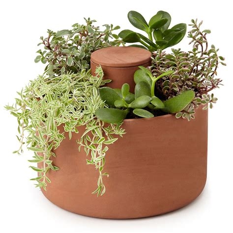 self watering herb and succulent planter the green head