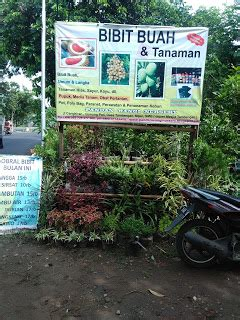 Sekam Bakar Semarang bibit tanaman buah di semarang bibit tanaman buah di semarang