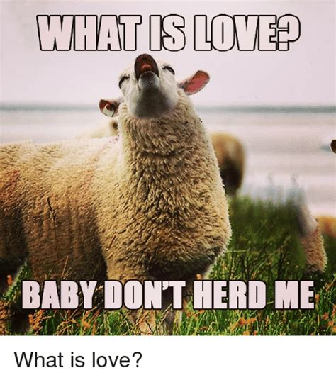 Meme Me - what is love baby dont herd me what is love love meme on me me