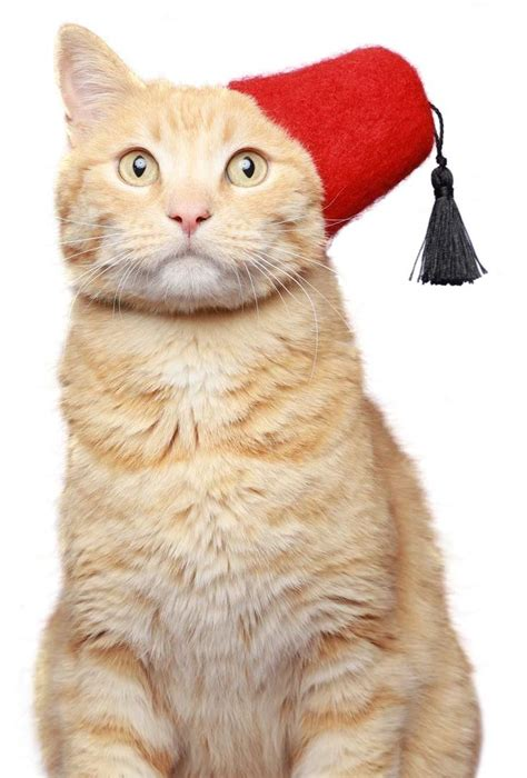 cat in hat 1000 images about cats with hats on the