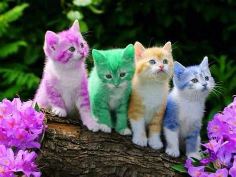 color kittens multi colored kittens my favorite photos