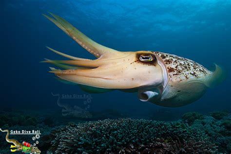 dive site padang bai dive scuba in blue lagoon jepun shark