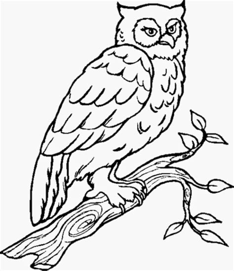Owl Coloring Pages All About Owl Owl Coloring Pages