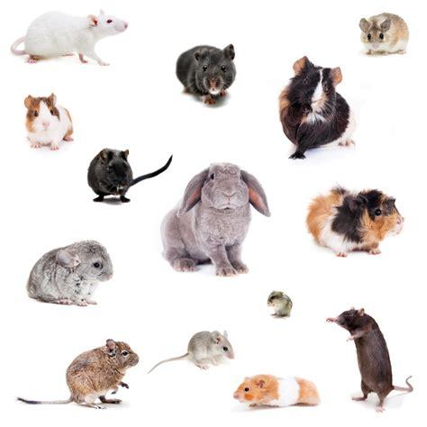 types hamster atol protected les diff 233 rents rongeurs de compagnie de croquetteland