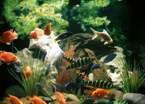 aquarium decorations aquarium decorations video aquarium decorations