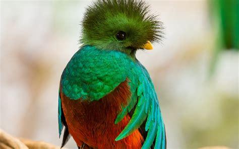 especies de pajaros silvestres pajaros de nuestros cos aves extraordinarias de m 233 xico