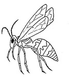 insect coloring pages insect coloring pages