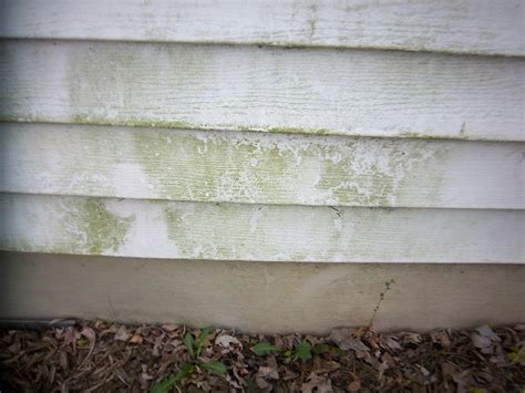 how to clean siding on house mildew budgeting with the bushmans cleaning mildew off siding