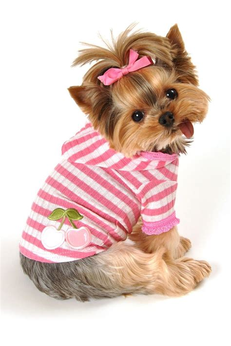 yorkies with bows pink stripe cherry hoodie on hautelook clothes puppys