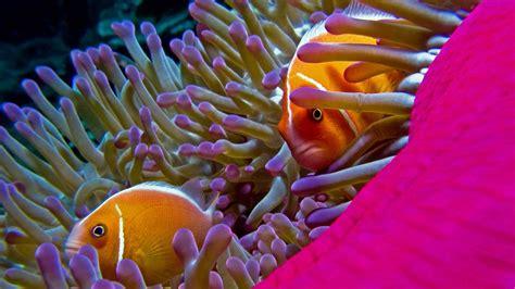 wallpaper fish hd wallpapers