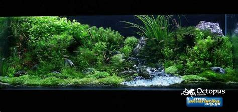 The Best Aquascape by Best Aquascapes Of 2009 Let S See Em Aquascaping World
