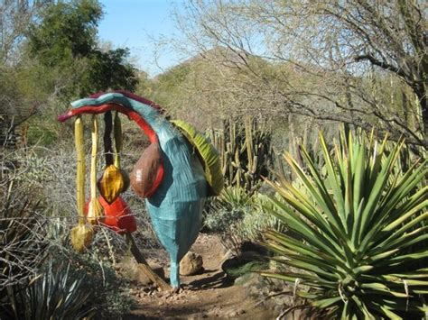 Desert Botanical Garden Hours Colorful Desert Plants Picture Of Desert Botanical Garden Tripadvisor