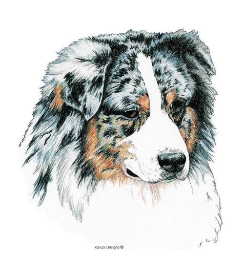 Australian Duvet Covers Australian Shepherd Blue Merle Drawing By Kathleen Sepulveda
