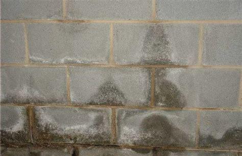 Denton, NC  Wet Basement Receives Transformation