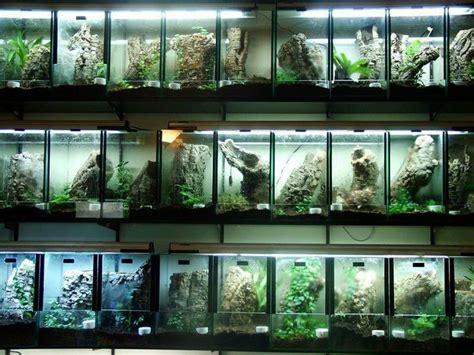 images  tarantula enclosures  pinterest