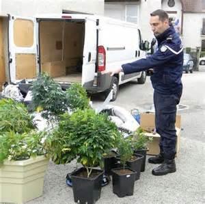 cultivateur de cannabis kana cleaner