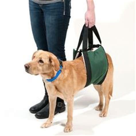comfort lift carrier help em up dog harness cruising pinterest dog