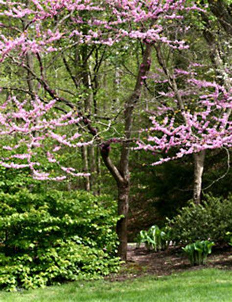 pin treebaldcypress on pinterest