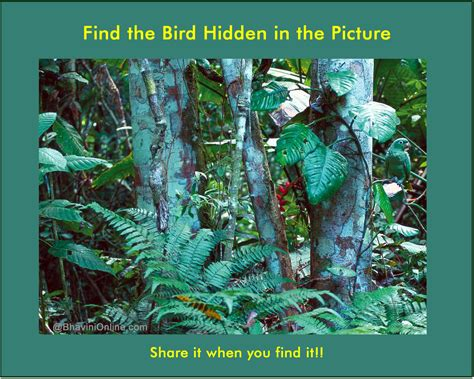 Find In The Picture Riddle Find The Bird In The Forest
