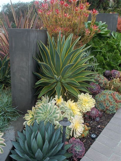 succulents garden ideas 50 best succulent garden ideas for 2017