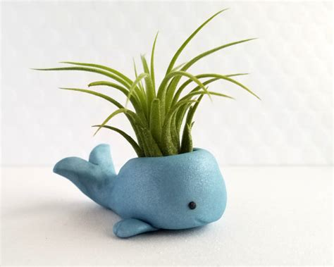 Cute Plants | air plant whale cute airplant holder small by