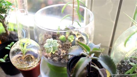 fensterbrett pflanzen pflanzen am fensterbrett kleine 220 bersicht