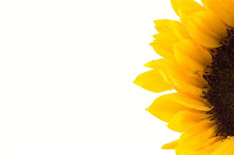 3d Wall Panel Photo Collection Sunflowers Macro Hd Wallpaper