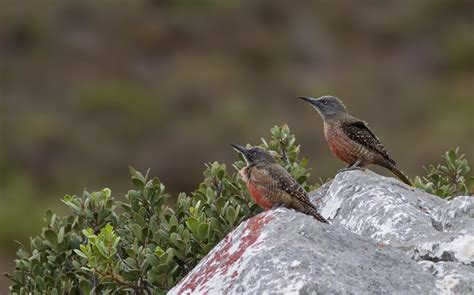 western cape bird challenge gotta tick em all