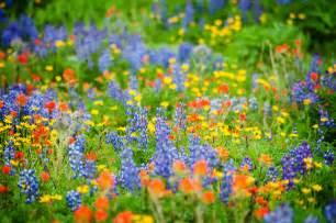 Wildflower viewing in greater portland travel portland