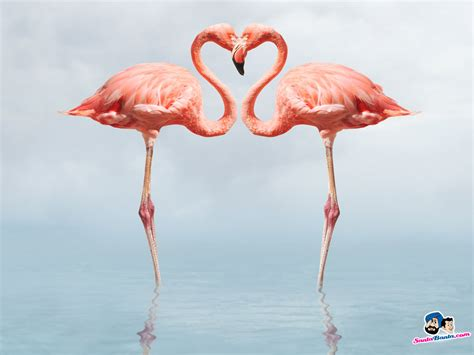 flamingo wallpaper on love it or list it flamingos birds wallpaper couples pinterest flamingo