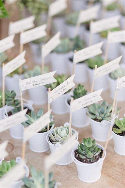 Succulent Wedding Favors   Succulents for Sale   Succulent