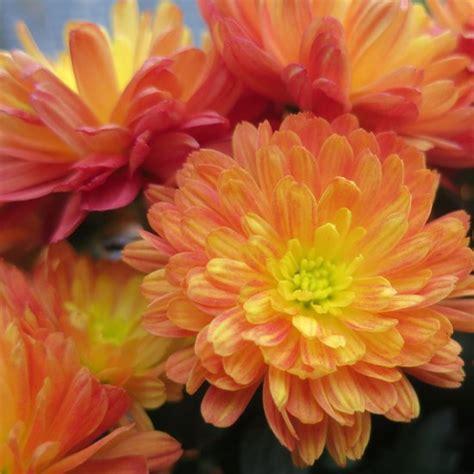 the best flower delivery services popsugar home
