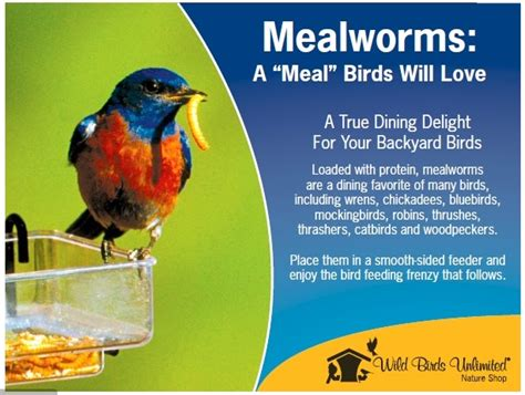 wild birds unlimited what birds are attracted to