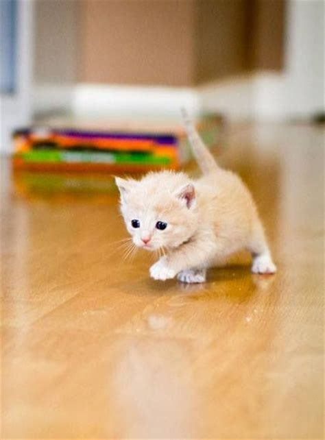Cutest Cats Pet Pet Pet Product 7 by 25 Best Ideas About Baby Kittens On Baby