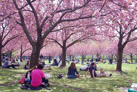 Nyc Nyc Cherry Blossom Season At Brooklyn Botanic Garden Botanical Garden Cherry Blossom Festival