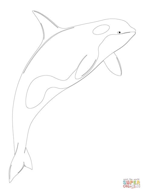 killer whale coloring pages orca whale shamu coloring page free printable coloring pages