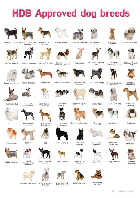 breeds species domestic breeds