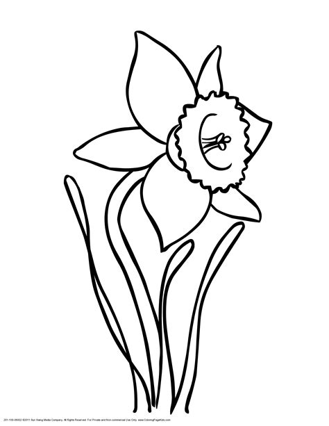 drawings of daffodils cliparts co