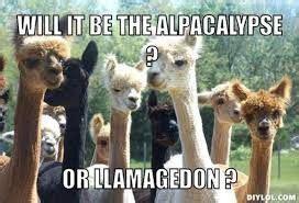 image result  funny llama memes funny llama alpaca