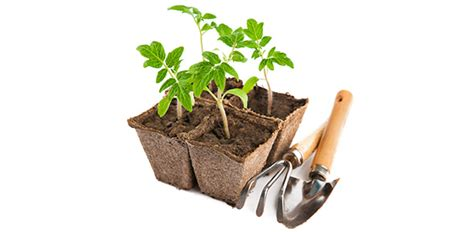 gardening quizzes trivia questions answers proprofs