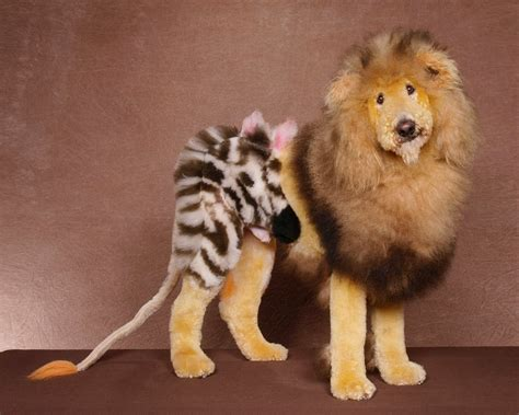 dogs that look like lions dogs dyed to look like other animals yellow tennessee