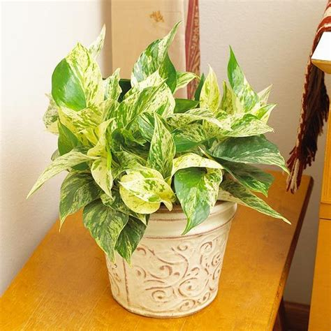 easy house plants 1000 images about house plants indoor on pinterest