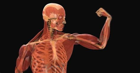 imagenes en 3d del cuerpo humano fisiolog 237 a i el cuerpo humano biolog 237 a