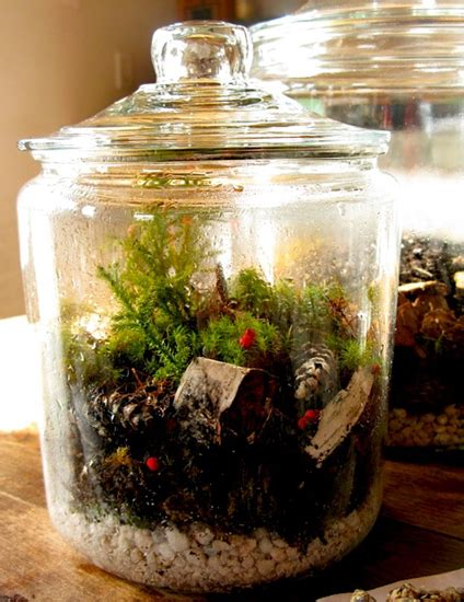 garden in a bottle how to create a terrarium or vivarium or self contained